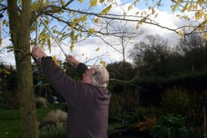 3754419 - image of a male gardener using loppers to trim dead branches